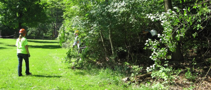 Picture of woodline full of bush honeysuckle